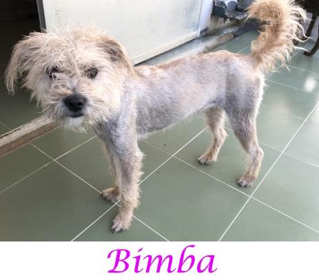Bimba – ADOPTADA