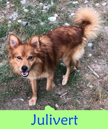 Julivert – ADOPTADO