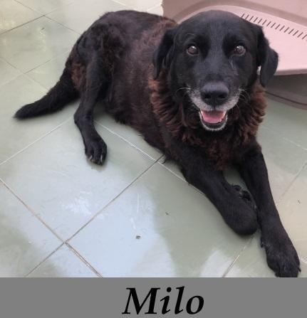 Milo – ADOPTADO