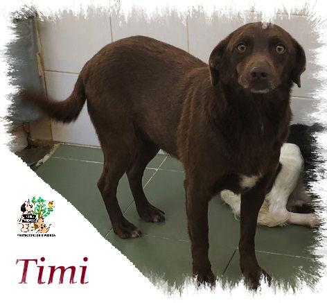 Timi – ADOPTADO