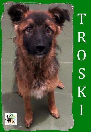 Troski – ADOPTADO