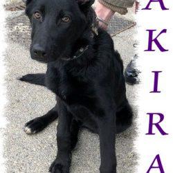 Akira – ADOPTADA