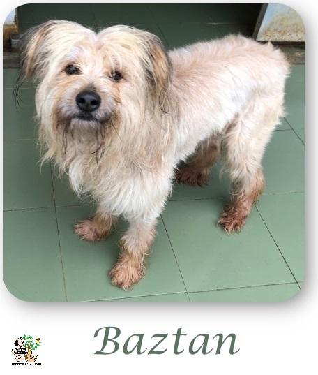 Baztan – ADOPTADO