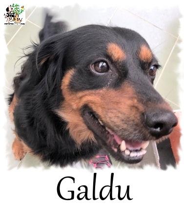 GALDU
