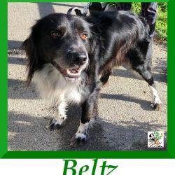 Beltz – ADOPTADO