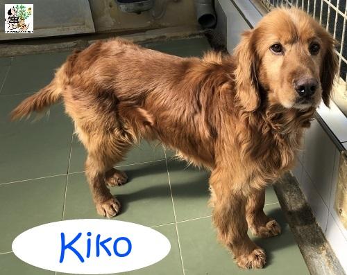 Kiko – ADOPTADO