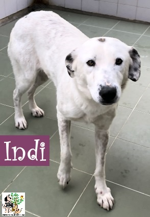 (Español) Indi – ADOPTADA