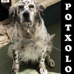 (Español) POTXOLO