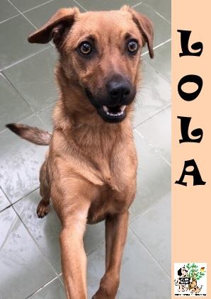 (Español) LOLA