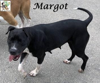 (Español) MARGOT
