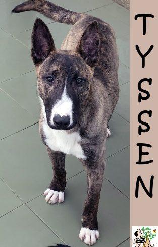(Español) Tyssen – ADOPTADO