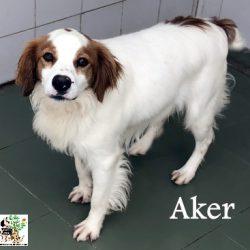 (Español) AKER