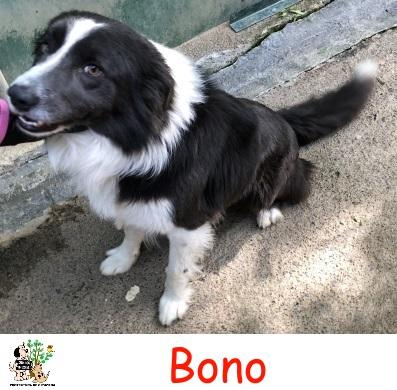 Bono – ADOPTADO