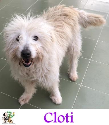 Cloti – ADOPTADA