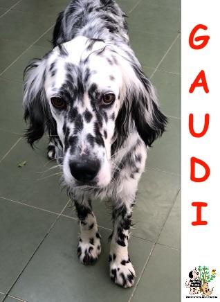 (Español) GAUDI