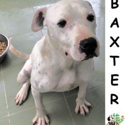 (Español) BAXTER
