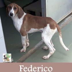 (Español) FEDERICO