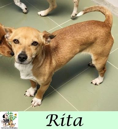 (Español) Rita – ADOPTADA