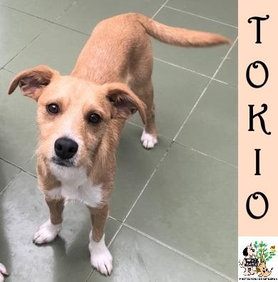 (Español) Tokio – ADOPTADO