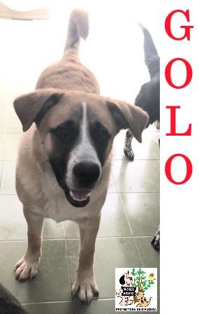 (Español) Golo – ADOPTADO