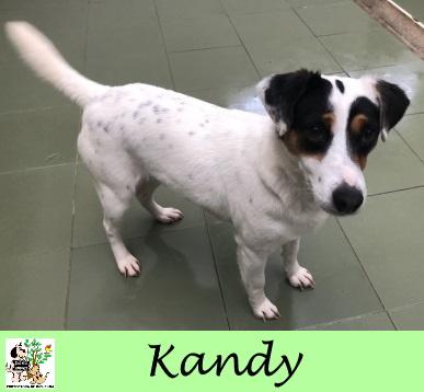 (Español) Kandy – ADOPTADA