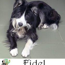 (Español) FIDEL