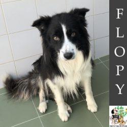 (Español) FLOPY