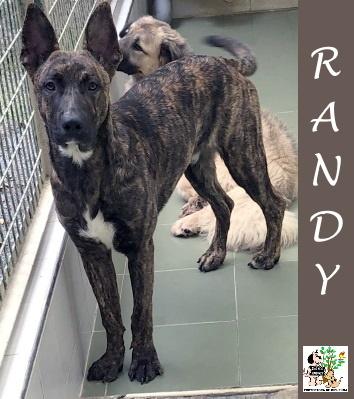 (Español) RANDY