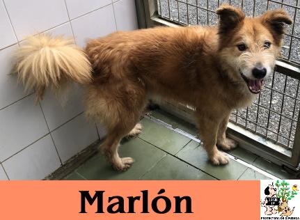 (Español) MARLON