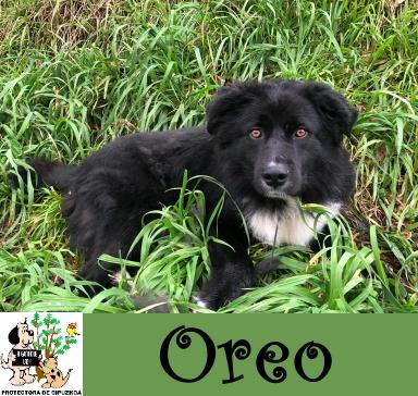 (Español) OREO