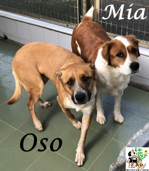(Español) OSO