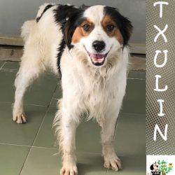 TXULIN