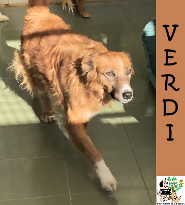 (Español) VERDI