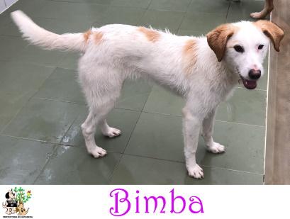 (Español) BIMBA
