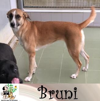 (Español) BRUNI