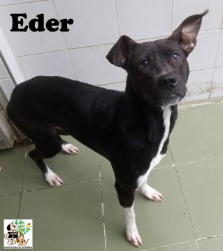 (Español) EDER