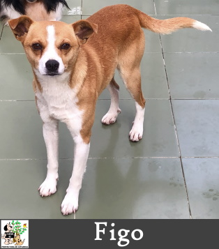 (Español) FIGO