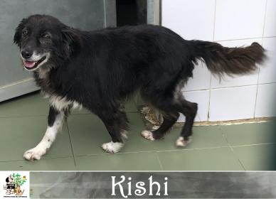 (Español) KISHI