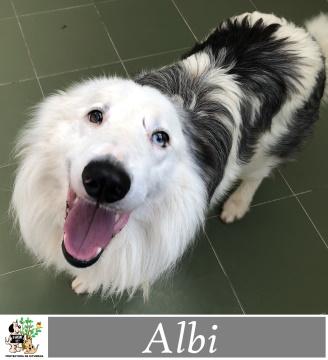 (Español) ALBI
