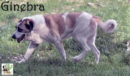 (Español) GINEBRA