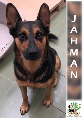 JAHMAN