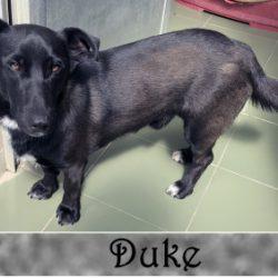 (Español) DUKE