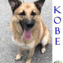 (Español) KOBE