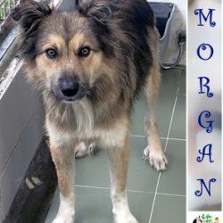(Español) MORGAN