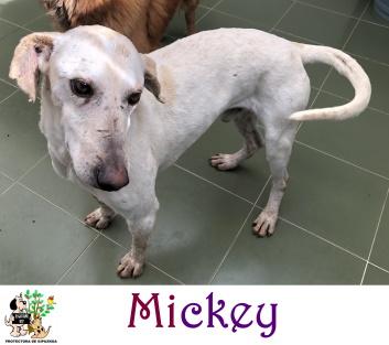(Español) MICKEY