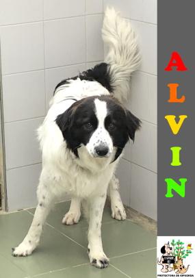 (Español) ALVIN