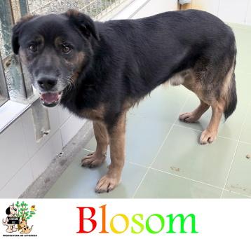 (Español) BLOSOM