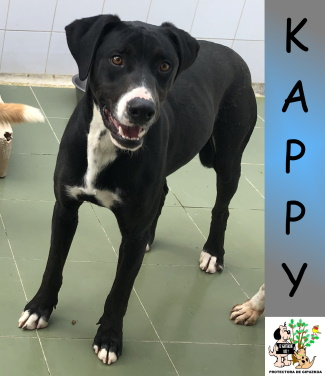(Español) KAPPY