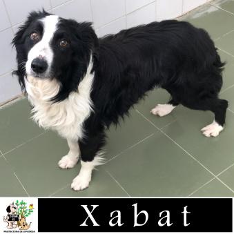 (Español) XABAT