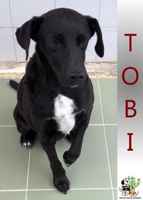 (Español) TOBI
